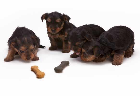 Pies odmawia jedzenia - możliwe przyczyny